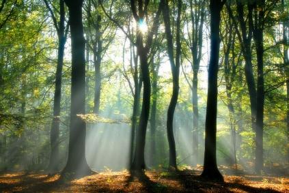 Bureau Veritas -Forest