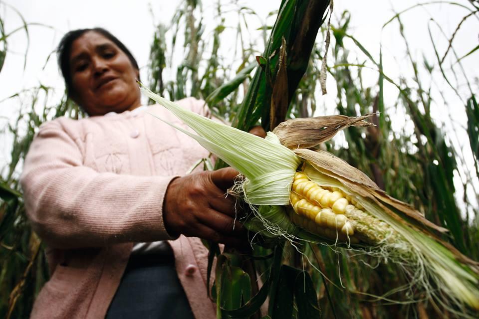 La mitad de los peruanos con  riesgo de sufrir inseguridad alimentaria