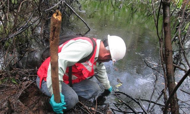 Supervisor del OEFA recolecta muestras (3) de agua en un área impactada por el derrame. Foto: OEFA