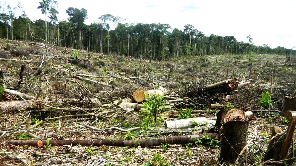 Deforestan