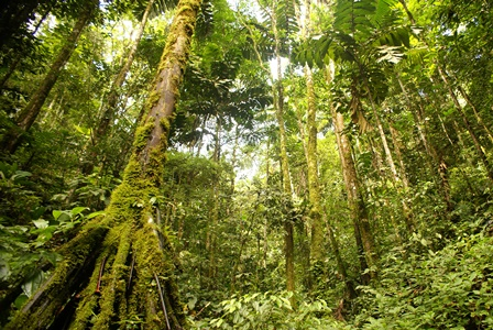 Bosque-amazónico