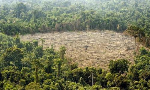 Brasil-creará-una-policía-especializada-en-combatir-la-deforestación