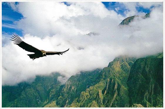 cordillera-condor