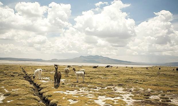 Albergue natural. El 9 agosto, este paraje cumple 36 años como reserva nacional  (Foto: la República)