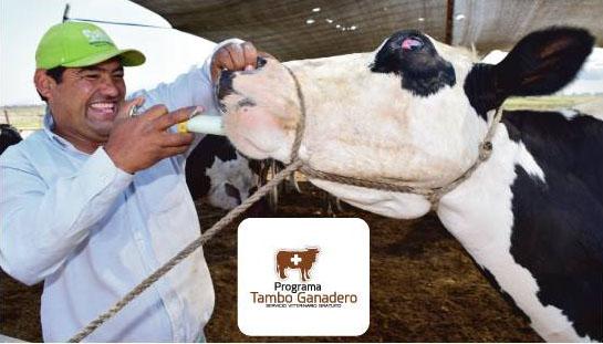 Southern Peru ofrece servicio veterinario gratuito en el Valle de Tambo