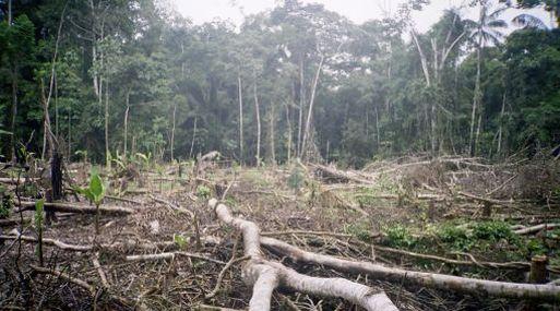 5 DE MAYO DEL 2007 INFORME SOBRE TALA ILEGAL Y REFORESTACION EN ZONAS RESERVADAS DE LA SELVA. EN IMAGEN: CAMPAMENTO MADEDERO EN LA ZONA DE SIERRA DEL DIVISOR. FOTO: MIGUEL BELLIDO /EL COMERCIO