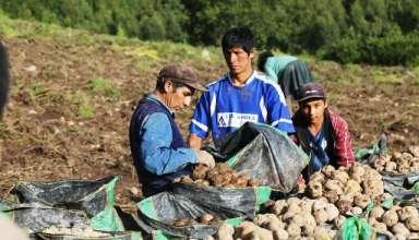 MINAGRI lanza Procompite Agrario dirigido a pequeños productores asociados